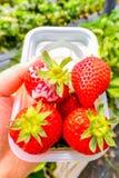 Nahaufnahme der großen Erdbeere auf weißer Schüssel mit versüßt kondensiert lizenzfreies stockfoto