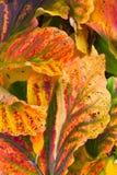 Nahaufnahme der Herbstblätter Stockbild