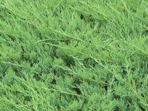 Nahaufnahme der Hintergrundbeschaffenheit grüne Farbbetriebs Stockfotos