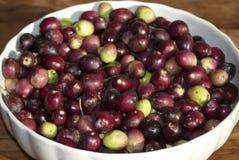 Nahaufnahme der italienischen schwarzen Olive Stockbild