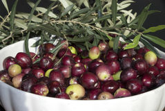 Nahaufnahme der italienischen schwarzen Olive Lizenzfreies Stockbild