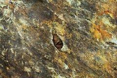 Nahaufnahme der kiesigen Felsen-Oberfläche Stockbilder