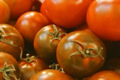 Nahaufnahme der kleinen runden Kirsche des roten grünen frischen organischen Biobauernhofes Stockfotografie