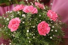 Nahaufnahme der lila und weißen Blumen stockfoto