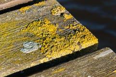 Nahaufnahme der moosigen Planken in einer alten Brücke Stockfotografie