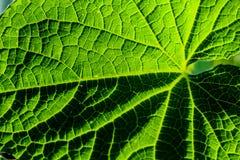 Nahaufnahme der Muster auf einem grünen Blatt Lizenzfreie Stockfotografie
