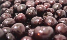 Nahaufnahme der purpurroten süßen reifen Kirsche, Kirschen lizenzfreie stockfotos