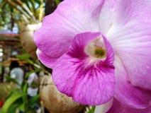 Nahaufnahme der rosafarbenen Orchidee Blumenstrauß von Blumen Lizenzfreie Stockfotografie