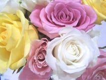 Nahaufnahme der Rosen Stockfotos