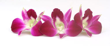 Nahaufnahme der roten Orchideen Stockbilder