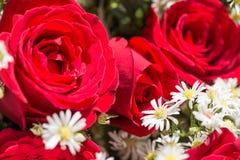 Nahaufnahme der roten Rosen und der Atemblumen des weißen Babys Stockbilder