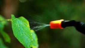 Nahaufnahme der Schädlingsbekämpfung stock video footage