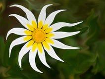 Nahaufnahme der schönen Gänseblümchenhintergrundbeschaffenheit Lizenzfreies Stockfoto