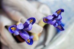 Nahaufnahme der schönen malerischen hellen Iris auf hellem Hintergrund, Blumengrußkarte zu allen wunderbaren Momenten Lizenzfreie Stockfotos