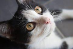 Nahaufnahme der schwarzen Katze Lizenzfreies Stockfoto