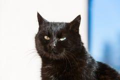 Nahaufnahme der schwarzen Katze Stockfoto