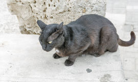 Nahaufnahme der schwarzen Katze der Straße Stockbilder