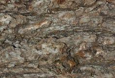 Nahaufnahme der trockenen rauen Barke des alten Baums als Hintergrundhintergrund oder Lizenzfreies Stockfoto