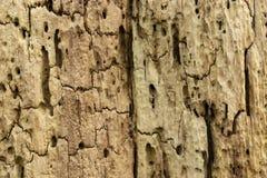 Nahaufnahme der Verrottungsbaumstumpfbeschaffenheit stockbild