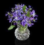 Nahaufnahme der violetten Blumen in einem Vase Lizenzfreie Stockfotografie