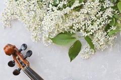 Nahaufnahme der Violine mit schönen blühenden Apfelbaumasten auf einem grauen Hintergrund Lizenzfreie Stockbilder