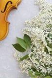 Nahaufnahme der Violine mit schönen blühenden Apfelbaumasten auf einem grauen Hintergrund Lizenzfreies Stockbild