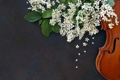 Nahaufnahme der Violine mit schönen blühenden Baumasten auf schwarzem Hintergrund Stockfotos