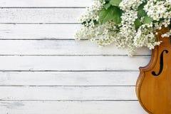 Nahaufnahme der Violine mit schönen blühenden Baumasten auf weißem Hintergrund Lizenzfreies Stockbild