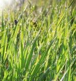 Nahaufnahme der vollkommenen Wassertröpfchen auf einem Grasblatt Stockfoto
