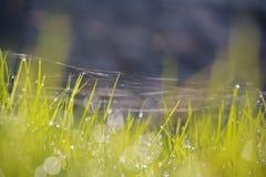 Nahaufnahme der vollkommenen Wassertröpfchen auf einem Grasblatt Stockbild