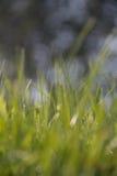 Nahaufnahme der vollkommenen Wassertröpfchen auf einem Grasblatt Lizenzfreie Stockbilder