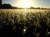 Nahaufnahme der vollkommenen Wassertröpfchen auf einem Grasblatt lizenzfreie stockfotos
