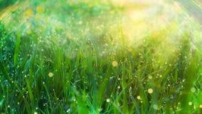 Nahaufnahme der vollkommenen Wassertröpfchen auf einem Grasblatt Stockfotos