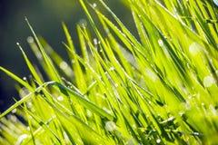 Nahaufnahme der vollkommenen Wassertröpfchen auf einem Grasblatt Lizenzfreie Stockfotografie