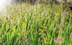 Nahaufnahme der vollkommenen Wassertröpfchen auf einem Grasblatt Lizenzfreies Stockbild