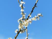 Nahaufnahme der weißen Blumen Stockfotos