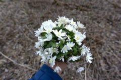 Nahaufnahme der weiblichen Hand einen Blumenstrau? von Schneegl?ckchen in der Natur halten lizenzfreies stockbild