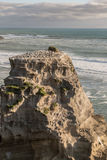 Nahaufnahme der züchtenden Basstölpelkolonie auf Felsen Stockfoto