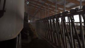 Nahaufnahme der Zufuhrmaschine auf Bauernhof gesamtlänge Zufuhr-LKW entlädt Scheune der Viehbestandzufuhr herein Landwirtschaft u stock footage