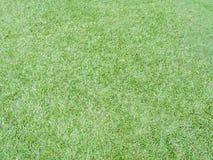 Nahaufnahme des abstrakten Bodenhintergrundes des grünen Grases Lizenzfreie Stockfotografie