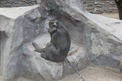 Nahaufnahme des Affen auf dem Felsen 18688 Stockfotografie