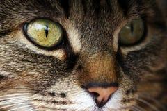 Nahaufnahme des Auges einer Katze Lizenzfreie Stockbilder