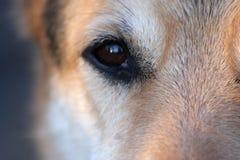 Nahaufnahme des Auges eines Hundes Stockfotos
