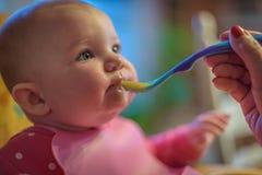 Nahaufnahme des Babys, das Säuglingsnahrung mit Löffel eingezogen wird lizenzfreies stockbild