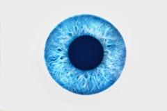 Nahaufnahme des blauen Auges auf weißem Hintergrund Lizenzfreie Stockfotos