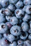 Nahaufnahme des blauen Beerenobstes in einer Gruppe. Stockbilder
