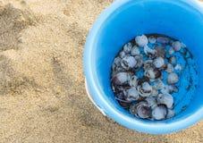 Nahaufnahme des blauen Eimers auf Sand mit Seeoberteilen lizenzfreies stockbild