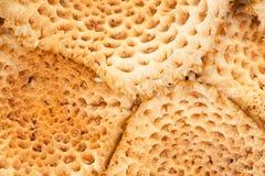 Nahaufnahme des Blockes der Pilze des schuppigen Pholiota Lizenzfreie Stockfotografie