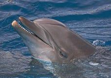 Nahaufnahme des Delphins Lizenzfreie Stockfotos