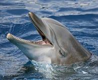 Nahaufnahme des Delphins Stockbild